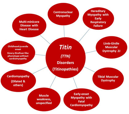 Titin infographic