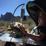 Myo in Picacho Peak State Park