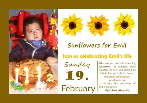 Sunflowers for Emil