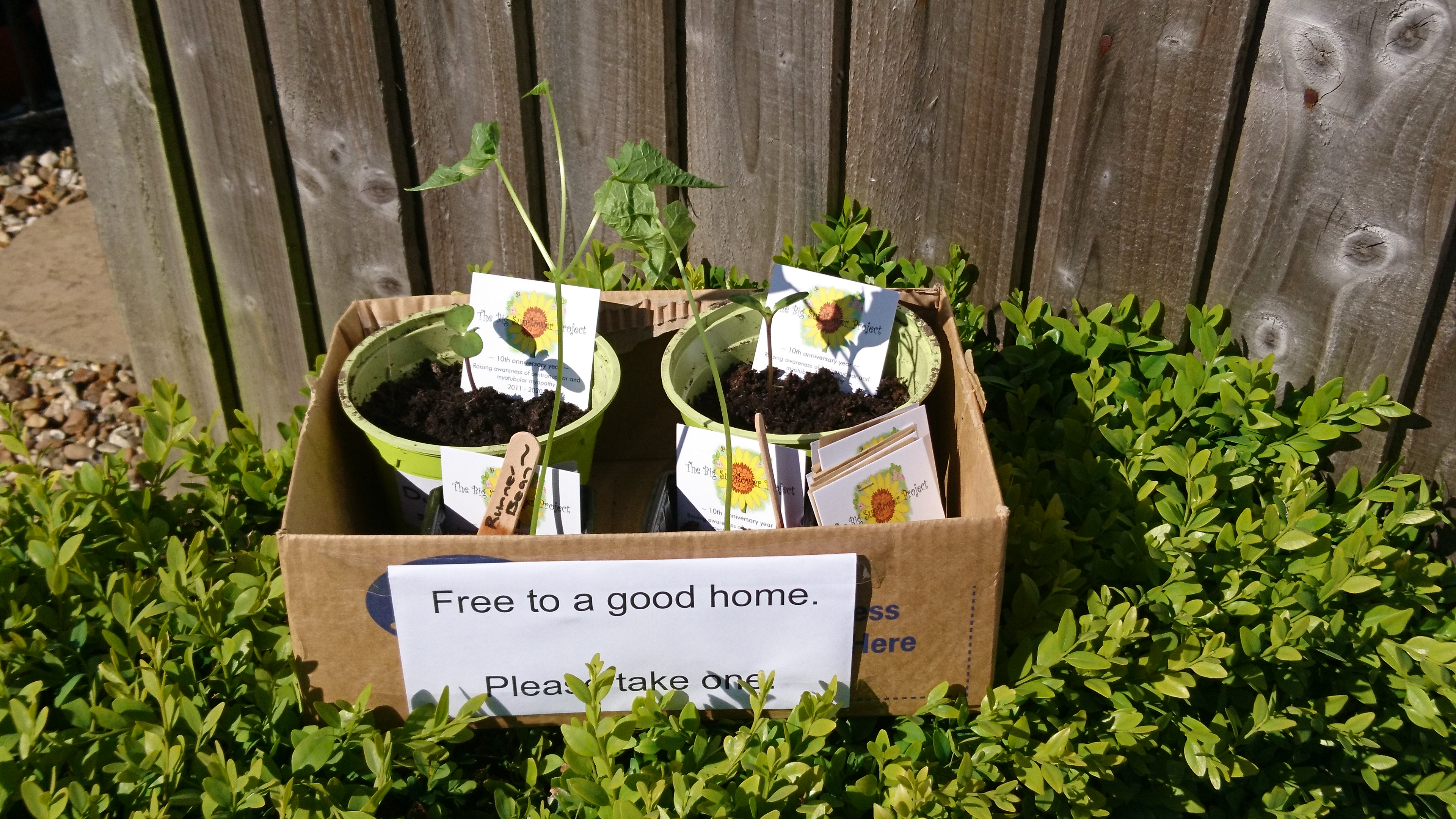 Free seeds and plants.